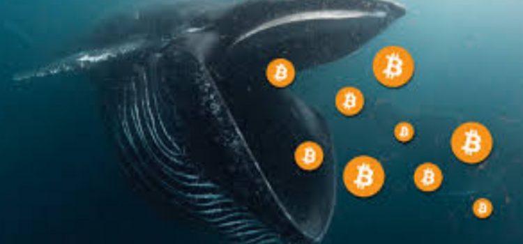 خرید میلیارد دلاری بیت کوین توسط دو نهنگ