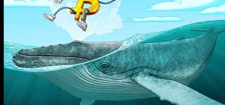 یک نهنگ بیت کوین 100 بیت کوین را برای اولین بار بعد از 11 سال انتقال داد